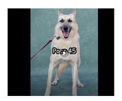Пропала собака в районе Измайловского лесопарка