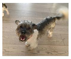 В районе Апрелевки пропала собака без породы в д. Власово - Награда 10 000 руб.
