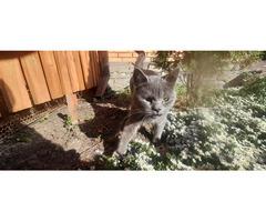 В Батайске на РДВС найден кот